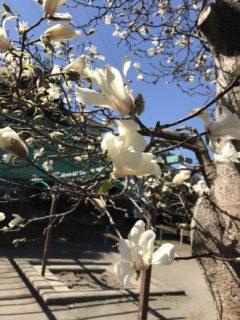 平成最後の春が来た!